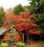Cabin in the Fall Leaves