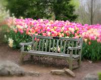 Sitting by the Tulips