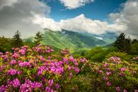 Appalachian Mountains Spring Flowers Scenic Landsc