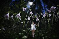 Twinflower-fairy dark (1 of 1)