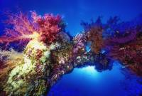 The Soft Corals Arch