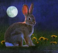 baby cottontail by moonlight