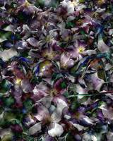 Clematis Flowerfall - Abstract