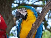 a bright colorful tropical Macaw