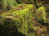 Mossy Forest Rock