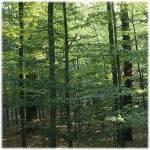 """German Forest"" by markusberndt"