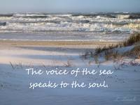 beach voice of sea