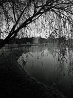 Tim and Gayla's Pond BW