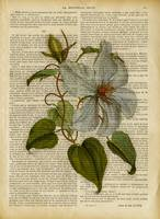 old book page botanical flower