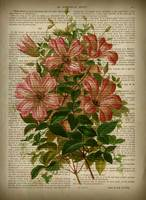 old book page botanical flowertu9yt891)