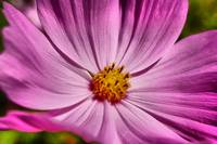 Pink flower macro close up photography