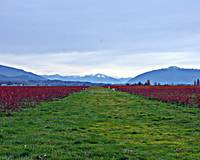 Whidbey Island Field