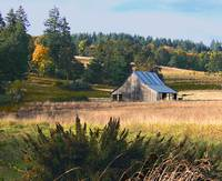 Yamhill County Barn with Llama