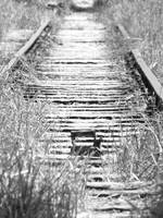old rail lines
