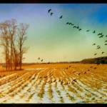 """""""Wing"""" by manymuses"""