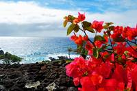 Maui Hawaii coastline flowers ocean