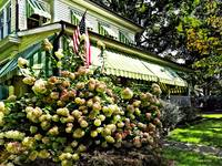White Hydrangeas By Green Striped Awning