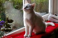 White Cat on Sill