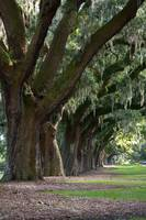 Charleston, South Carolina Plantation - 3