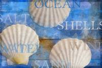 Shells on Blue Wood