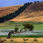 """Mixed Farming"" by TasPhotos"