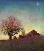 barn on hill with apple tree