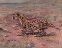 The Wild Beasts of the World - cheetah 1909 resize