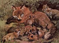 Vintage Fox and Cuba Painting (1909)