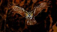 Flying Owl In Brown 02