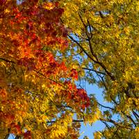 Fall Colors, Blue Sky, Ohio