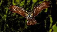 Flying Owl In Green