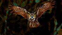 Flying Owl through the Lichen