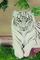 White Tiger Glare