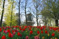 Keukenhof Windmill Lisse South Holland Netherlands