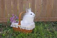 White Easter Bunny Rabbit in a Basket w/ Lilacs