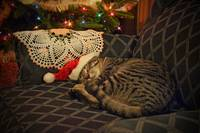 Santa Daisy the Kitty Cat Kitten Christmas
