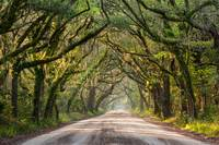 South Carolina Lowcountry Coastal Road