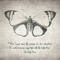 Butterfly Quote - The Little Prince