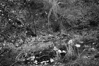 Spring along the creek (B/W)