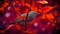 Bird in red