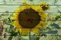 ORL-11632-2 Rustic Sunflower 4