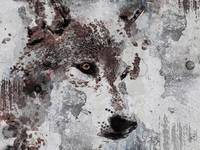ORL-11580-1 Gray Wolf 1
