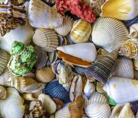 Tropical Beach Seashell Treasures 1550B
