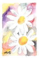 Daisy flower painting