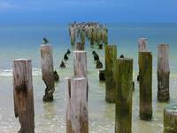 Pelicans and Posts-One