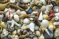 Tropical Beach Seashell Treasures 1529A