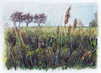 Haze on the Grass Watercolor