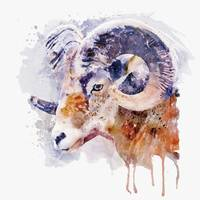 Bighorn Sheep watercolor portrait