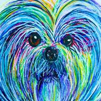 Shih Tzu Intense Colors