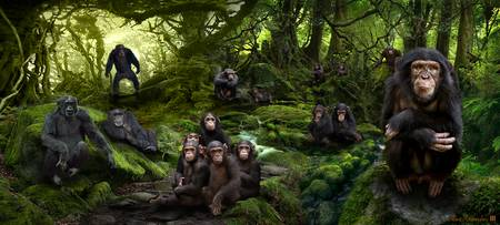 Family Portrait - Chimps